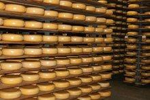 Halal cheese, vegetarian cheese, organic cheese