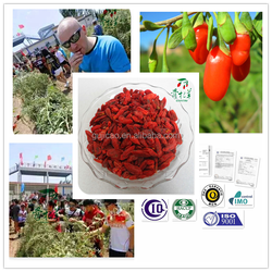 Goji powder/ goji extract/ goji berry/ dried organic goji/ berry goji/ factory-price goji berry/ goji juice/ goji oil/wholesale
