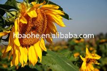 Organic Farm Amino Acid Zinc Chelate Foliar Fertilizer