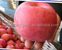 qinguan apple factory