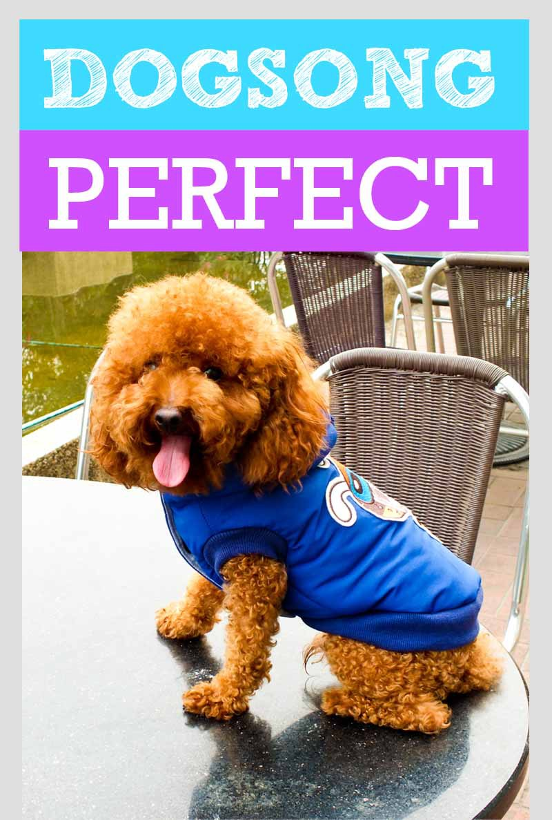 Factory OEM made minimum order 100pieces funny hot pet clothes dogs coat