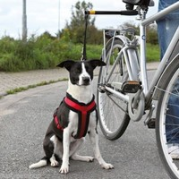 NEW Dogs Lead Bike Distance Keeper Dog Walking Bike Leads Exercise With Your Dog C1379