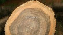 Panama Teak wood round logs