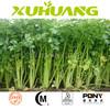Factory supply celery herb extract/Apigenin96%/celery root extract