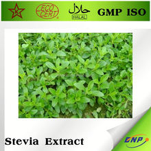 Gmp Certified Manufacturer Supply Stevia Extract