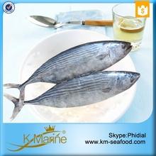 Natural Food Sea Frozen Sarda Tuna Fish