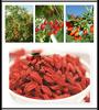 dried goji berry/organic goji berry,Wolfberry polysaccharides goji Extract goji berry importers goji berries seed