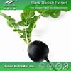 Top Quality Black Radish Root Extract, Black Radish Powder