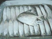 South African Silver/White Pomfret Fish