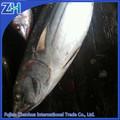 exportación de pescado de pescados y mariscos al por mayor de pescados y mariscos congelados barrilete ronda de todo