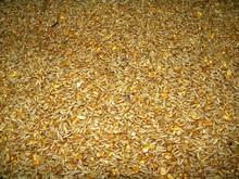 yellow corn animal feed