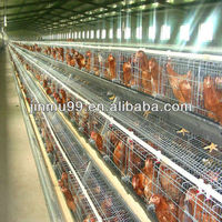chicken cage poultry farm