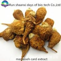 factory hot sale men sexual health and sex medicines product 100% natural maca extract/ maca powder/ maca extract powder
