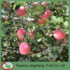 High Quality Fresh Honey Fuji Apples