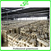 Hot sale industrial mushroom greenhouse