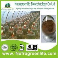 factory supply best price ganoderma lucidum essence