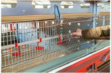 broiler cage with trough(hot dip galvanized sheet)
