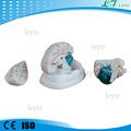 Xc-304 médica del cerebro humano modelo precio