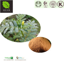 100% Pure herbal Supplements Tribulus Terrestris Extract