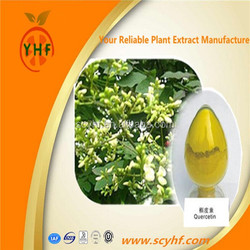 Herbal Extract 98% Quercetin,Sophora Japonica Extract from GMP Supplier