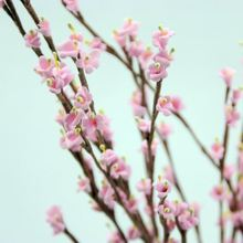 Beautiful winter jasmine