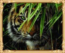 GX7418 paint by numbers kits tiger photo canvas oil painting for wall art