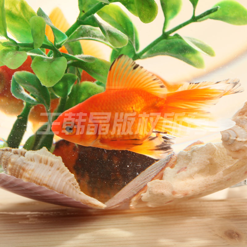 Vente chaude des r servoirs de poissons de verre en forme for Vente aquarium poisson