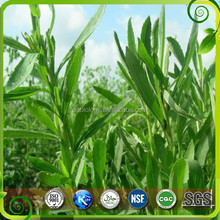 GMP manufacturer wholesale 100% high quality extraction stevia,stevia extract,stevia extract powder