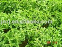 natural stevia extract 90%-95%
