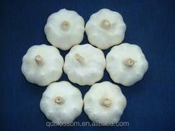 Shandong Garlic supplier