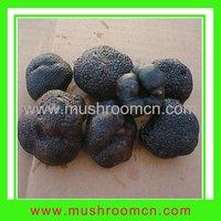 Fresh Organic Tuber Truffle