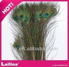 venta al por mayor 100 natural unidades real pavo real plumas de la cola