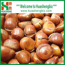 Hot Selling fresh chestnuts - Organic and best Chinese chestnuts for sale