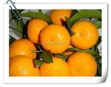 Chinese Mandarin orange Citrus fruits