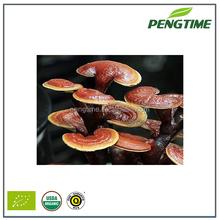 Lucid Ganoderma,Reishi,Ling Zhi Body Fruit