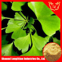 Free sample dried ginkgo leaf/ginkgo biloba extract powder with ISO certificate professional manufacturer