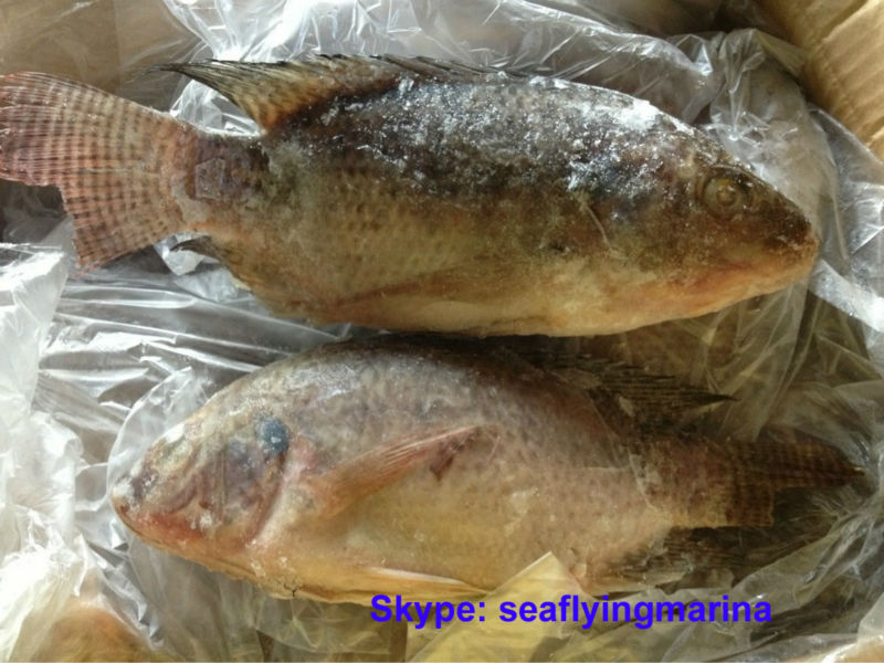 Qingdao china tilapia fish companies with tilapia fillet for Tilapia not real fish