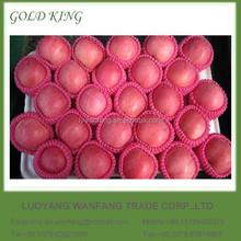 Good Price Fresh Apple Fruit in China