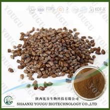 Venta caliente cassia semillas semen cassiae semillas / cassiae torae semen extracto