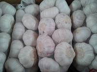 Global Gap Fresh normal white garlic for export
