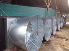 broiler chicken equipment tunnel ventilation poultry house