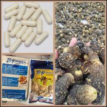 Chinese Maca, black Maca root in herbal extract