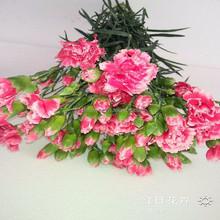 Precio bajo todos los tipos de flores comprar de flor plantación de base