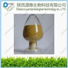 High Quality Triterpene Glycosides5% black cohosh herb Black Cohosh Extract Glycosides black cohosh