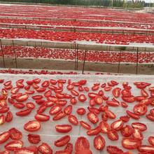 2015 Fresh Bulk Dry Tomatoes