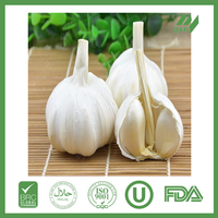 natural fresh garlic with good quality