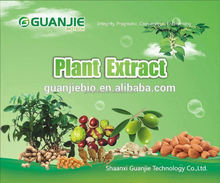 Top Quality From 10 Years experience manufacture Green Bean