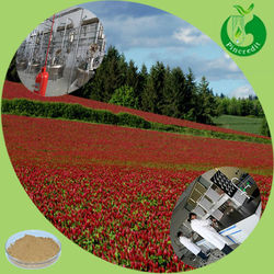 Pure red clover seeds red clover P.E red clover extract