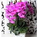 مطاط الاصطناعي زهور الأوركيد pev ليف مع وعاء الجملة