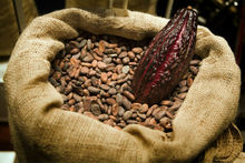 Raw Organic Cacao (Cocoa) Beans or Nibs from the mountains of Colombia